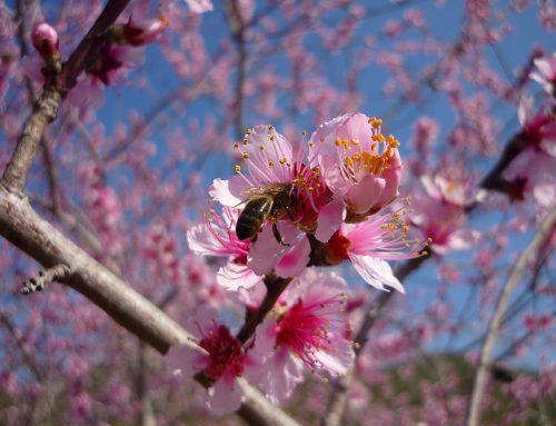 8 medidas para reducir la exposición al polen